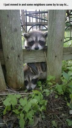 Best Neighbors Ever