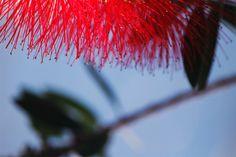 #planta #cielo