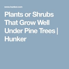 Plants or Shrubs That Grow Well Under Pine Trees | Hunker