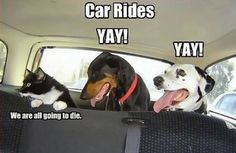 LOL Car ride with your pets. #meme