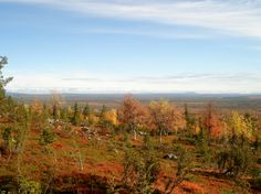 Fall colors in Lapland, Finland - Lapin ruskaa - Photo: Anneli Paavola