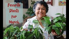 My Favorite House Plants for March 2021 Balcony Garden, Container Gardening, House Plants, Sassy, Succulents, Give It To Me, March, My Favorite Things, Indoor House Plants