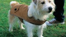 Country Gent Tweed Coat Keep your pup warm and stylish in all kinds of weather. By Lilly Shahravesh This project is excerpted from Canine Couture by Lilly