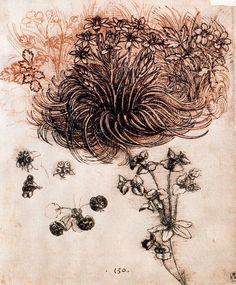 Leonardo da Vinci, 'Star of Bethlehem and other plants'