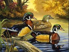 Duck Pictures, Pictures To Paint, Wildlife Paintings, Wildlife Art, Art Canard, Duck Drawing, Duck Art, Cross Paintings, Wild Birds