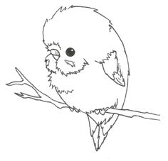 draw a budgie - Google Search