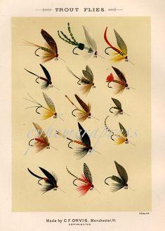 trout flies glorious fly fishing print no. 3 by EPHEMERApress, $12.50