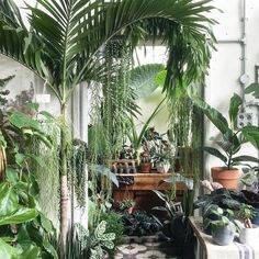 One of the most inspirational places to buy plants in London