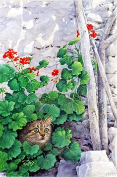 Lesley Anne Ivory. tabby kitty with geraniums. Website has other Lesley Anne Ivory pictures