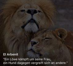 Ein Löwe #Zitate #Love #Deutsch #Sprüche