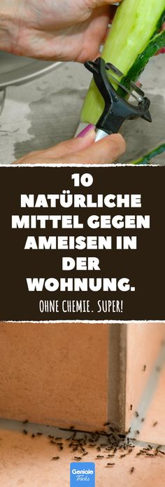 Without chemicals: 10 natural ant ants in the home. - 10 natural remedies for ants in the home. # ants # home remedies # exterminato - Garden Types, Love Garden, Garden Care, Natural Remedies For Ants, Limpieza Natural, Natural Cleaners, Survival Prepping, Diy Cleaning Products, Good Advice