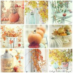 Automne/ Fall my favorite season!