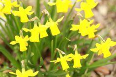 Chez Calicoba   Les fleurs du Printemps - Chez Calicoba