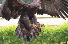A drug used on livestock in Europe and India has the potential to devastate the native bird population. Sign this petition and urge the European parliament to ban this drug to ensure the survival of our avian species. Philippine Eagle, Largest Bird Of Prey, Types Of Snake, Stop Animal Cruelty, Golden Eagle, Majestic Animals, Bird Pictures, Eagle Pictures, Birds Of Prey