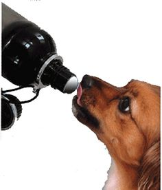 What evey dog needs...their own water bottle that releases water when they lick it :) for parker!