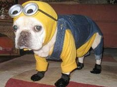 Meet Minion...  Poor doggy, he don't look to happy!