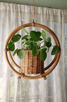 Hanging Plants, Potted Plants, Garden Plants, Indoor Plants, Small Plants, Room With Plants, House Plants Decor, Plant Decor, Indoor Garden