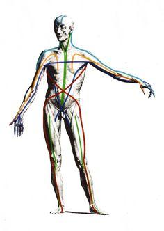 myofascial lines and merdians