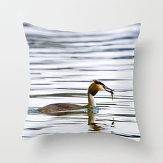 Great crested grebe and its catch Throw Pillow by Tapuphoto (Tapani Teittinen) Nature Photography, Throw Pillows, Home Decor, Toss Pillows, Decoration Home, Cushions, Room Decor, Nature Pictures, Decorative Pillows