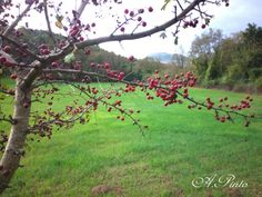 Bacche in autunno
