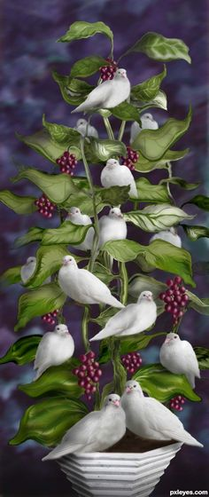 Lovey, Dovey Tree picture, by for: bird house 2 photoshop contest Beautiful Birds, Beautiful Pictures, Photoshop Pics, White Doves, Wow Art, Bird Art, Bird Feathers, Belle Photo, Fantasy Art
