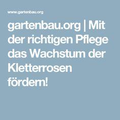 gartenbau.org   Mit der richtigen Pflege das Wachstum der Kletterrosen fördern!