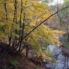 Leroy Oaks Nature Preserve
