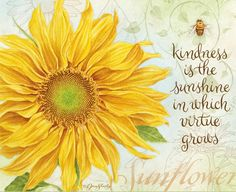"""Sunflower -♥- """"Kindness is the sunshine in which virtue grows"""" Sunflower Quotes, Sunflower Pictures, Sunflower Art, Sunflower Tattoos, Sunflower Kitchen, Sunflower Garden, Sunflowers And Daisies, Sun Flowers, You Are My Sunshine"""