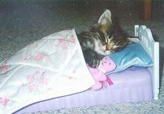 Sweet dreams kitty