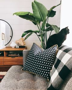 Good morning sunshine! Kitty likes to hang out by the Woven Polka Throw Pillow and Buffalo Plaid Fringe Throw   via @creekwoodhill