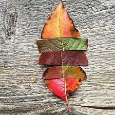 """The """"all in one"""" autumn beauty by (IG) @pulpandcircumstance #works #gardening #natureartboardUGR"""
