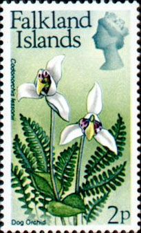 Royal Mail Postage Stamp from the Falkland Islands 1972 featuring the Dog Orchid flower Postage Stamp Art, Flower Stamp, Mail Art, Stamp Collecting, Orchids, Floral, Flowers, Islands, Fauna