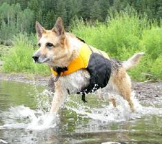 Cancer in Dogs  General Information on Diet and Supplements Treatment for Specific Types of Cancer