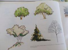 Desenho arvore magic color. Vegetaçao vista aerea paisagismo. Plantas