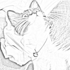 Neko-cat-gato