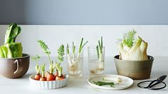 Have you tried growing food from scraps? These foods and their parts which you would throw away will surely amaze you once you try growing them back!