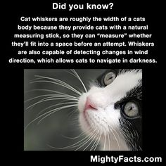 And also, this cat looks like Sam Elliott. Source by saving_cats_dogs_and_cash Sam Elliott, Animal Facts, Cat Facts, Crazy Cat Lady, Crazy Cats, Funny Animals, Cute Animals, Funny Cats, Cat Body