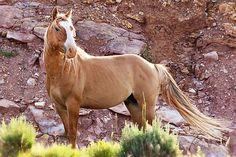 Thunderbolt band stallion
