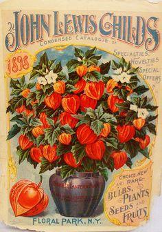 1898 Flower Catalogue ~ LÁMINAS ANTIGUAS 3-Ideas y Trabajos terminados (pág. 795)