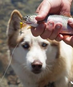 Is fish for dogs safe? Our extensive review supported by medical research studies takes a critical look at whether you should feed fish to your dog or not.