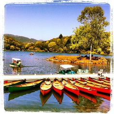 Gorgeous Lake Ralphine!  (Howarth Park, Santa Rosa, California) The paddle boats were the best