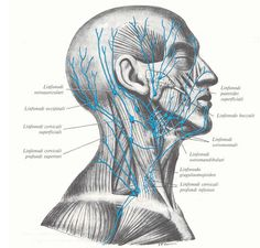 Risultati immagini per massaggio linfatico