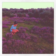 in a field of heather