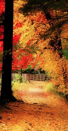 Autumn in New Hampshire • photo: nhpe1 on Flickr --Looking forward to my first New England fall!