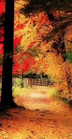 Autumn in New Hampshire •