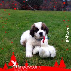 #Nano #campingriadearosa #riadearosa2 #petfriendly