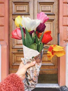 Tulips in Rome