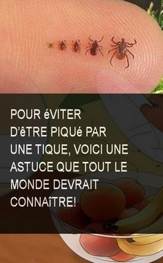 Pour éviter d'être piqué par une tique, Voici une Astuce que tout le Monde devrait Connaître! #Astuce #Vite #Evite #Eviter #Monde #Connaitre #Pique #Tique Kid Life Hacks, Bump Ahead, Important Facts, Flash Photography, Atkins Diet, Qigong, Lip Service, Survival Tips, Taking Pictures