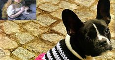 MATERIALES: 100 gramos de fibra acrilica semigorda en color negro; 100 gramos en color blanco; 50 gramos en color fucsia; Aguja para cr... Crochet Art, Crochet Gifts, Crochet Patterns, Dog Sweater Pattern, Animals And Pets, Chihuahua, Crochet Projects, Boston Terrier, French Bulldog