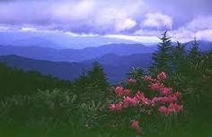 Roan mountain NC/TN